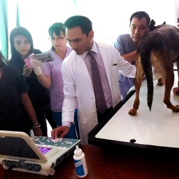 Diagnostico cardiaco especializado para perros