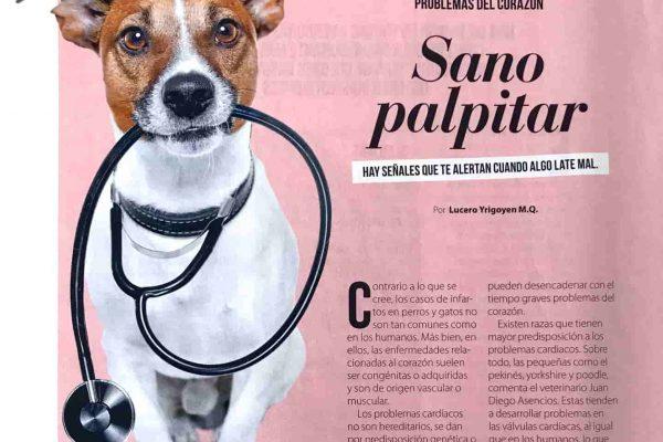 problmeas del corazon en perros y gatos
