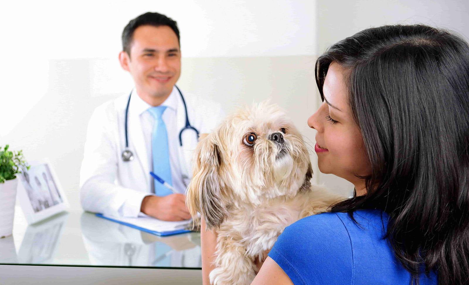 consulta de cardiología para perros y gatos