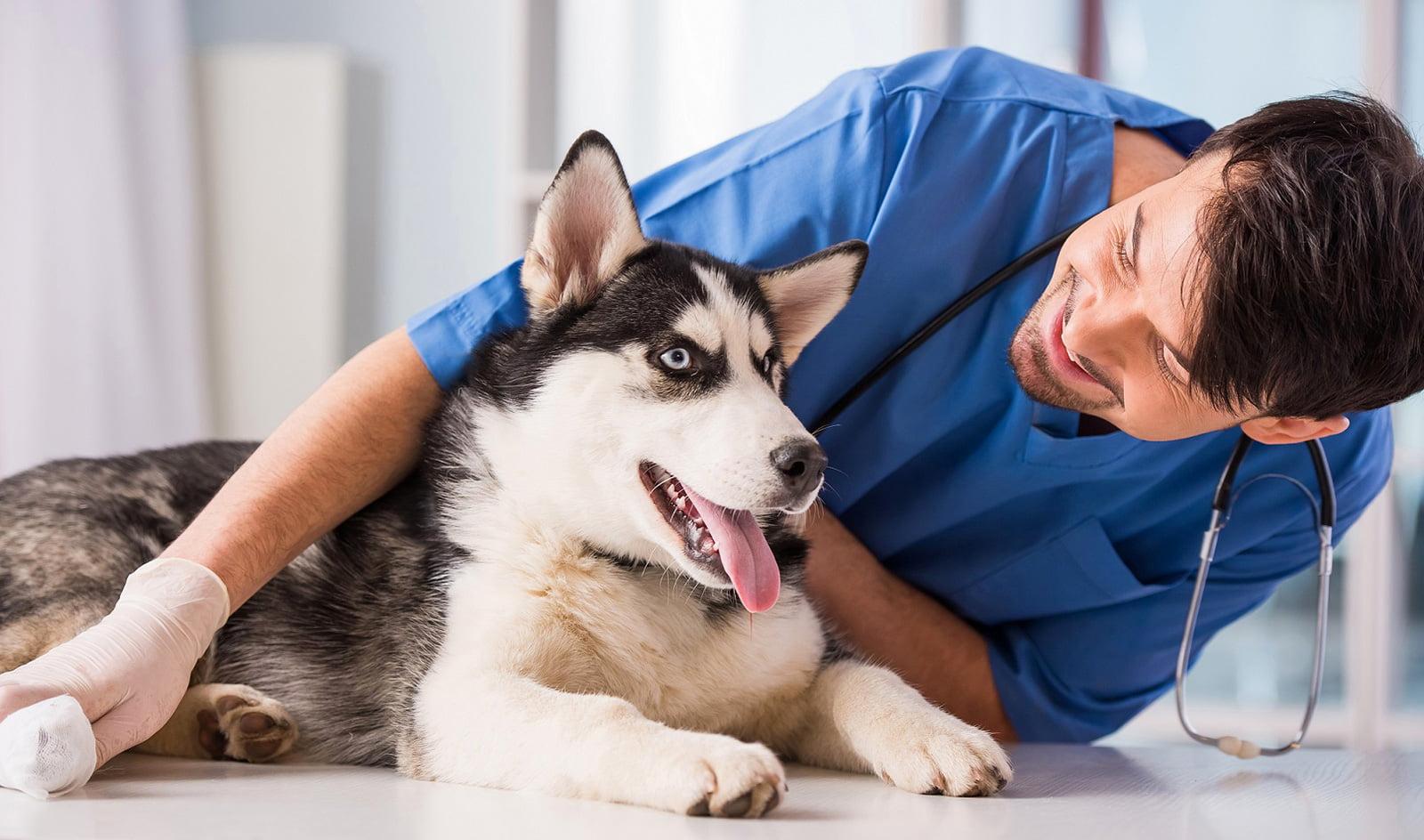 pericardio abdominal en perro atencion en peru