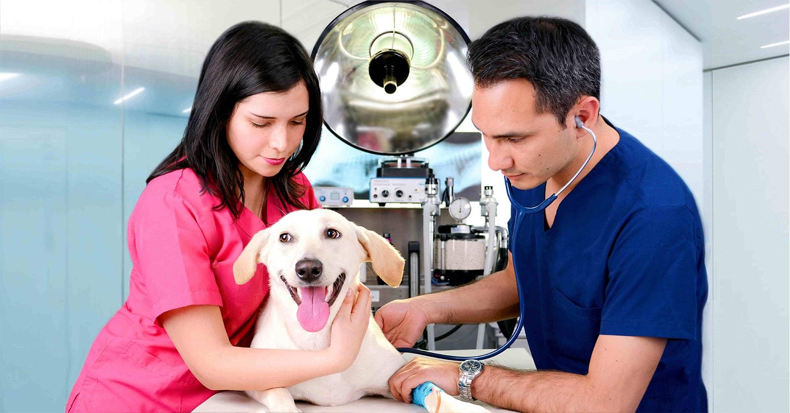 citas veterinarias en Lima Peru